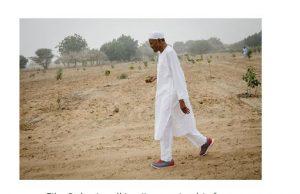 File: Buhari walking/inspecting his farm